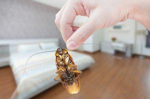 Kakkerlak in slaapkamer