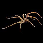 Afbeelding van een spinnen
