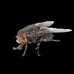 Afbeelding van een vliegen