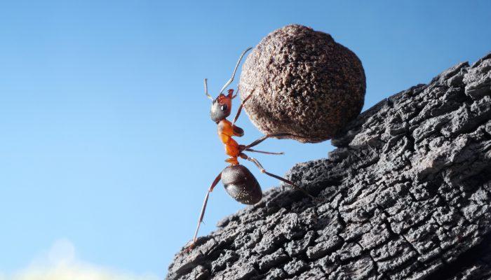 Mieren slaan 6 dagen geur van vijand op