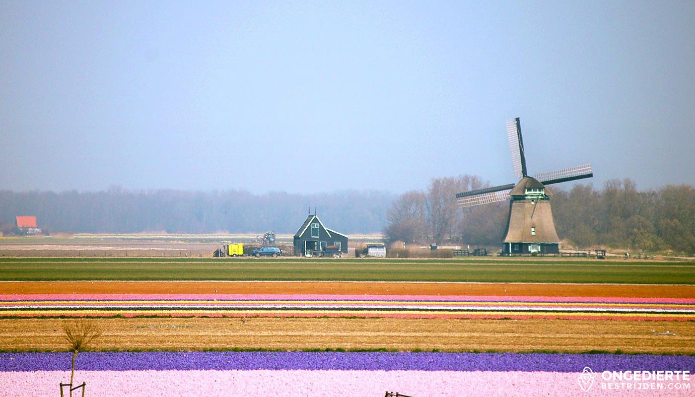 Uitzicht op huis met molen in Schagen