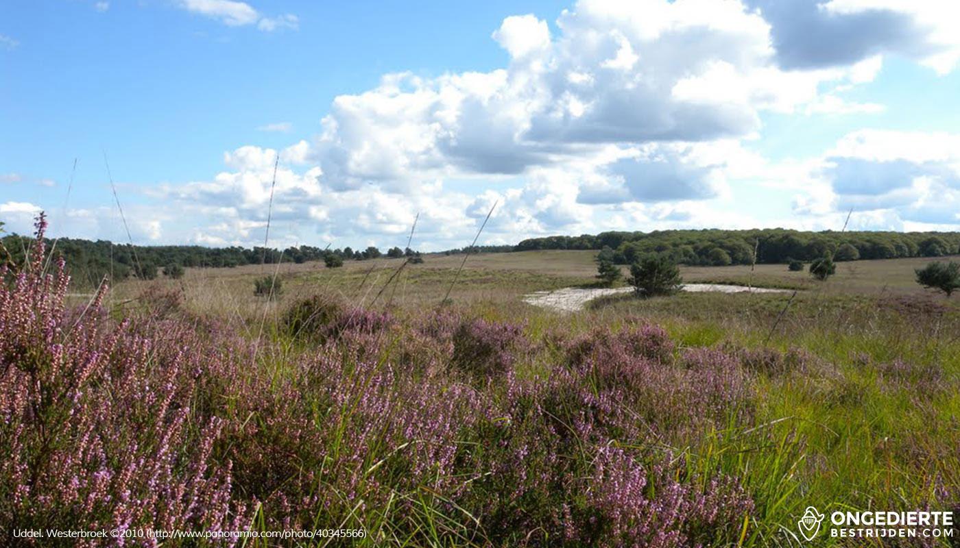 Heide in Uddel