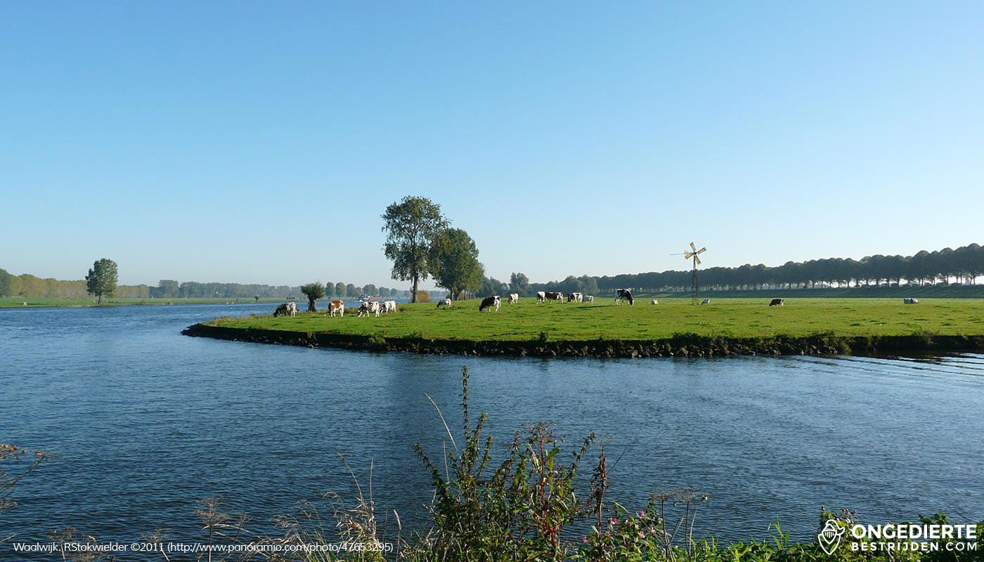 Uitzicht vanuit huis op het weiland in Waalwijk