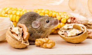eten-huismuis-noten
