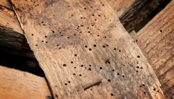 houtworm in houten balken in huis