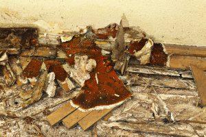 huiszwam tast hout aan