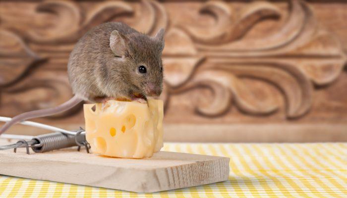 Wistjedatjes – Muizen