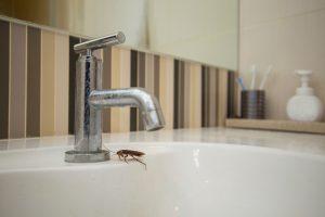 badkamer-kakkerlak-schuilplaats
