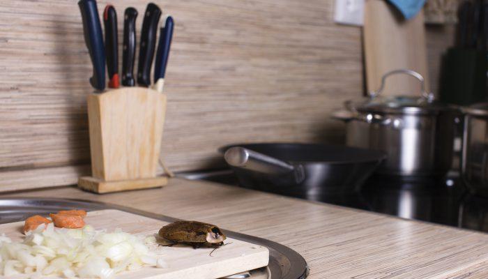 Kakkerlakken in de keuken op een snijplank