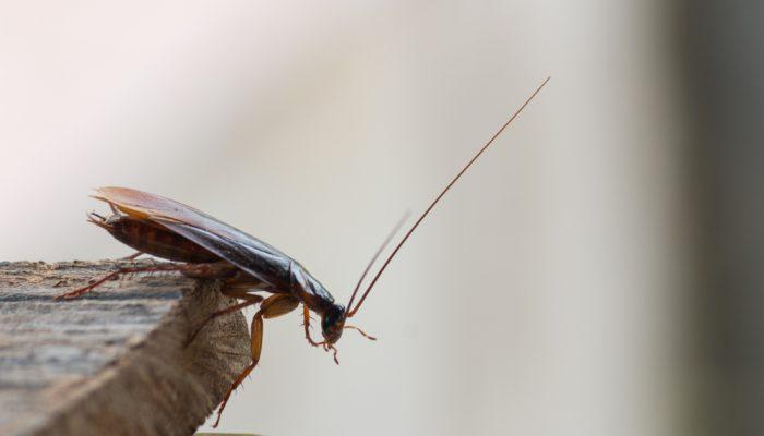verdwijntruc van de kakkerlak