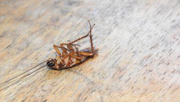 dode kakkerlak op de grond