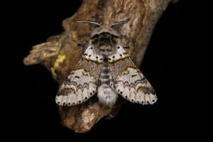 kleine hermelijn vlinder op tak