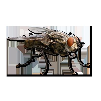 Foto van Klustervliegen
