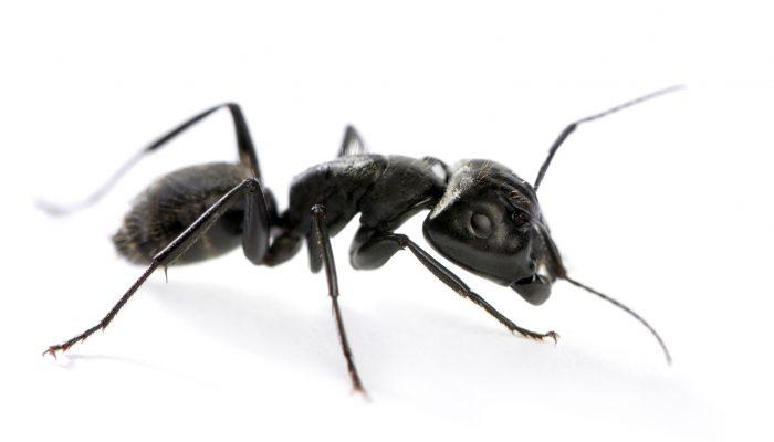 Vliegende mieren: je ziet ze overal!