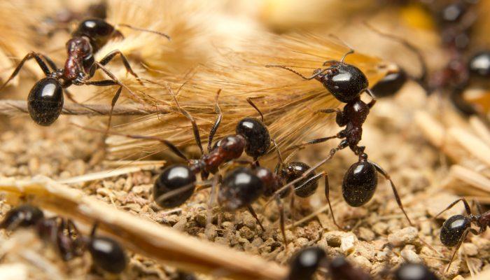 Mieren aan het werk