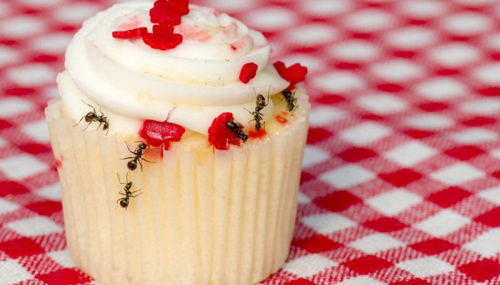 Spreekbeurt over mieren