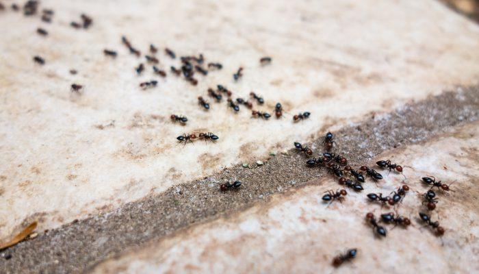Een mierenplaag tegengaan doe je zo!