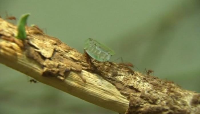 Mieren in Duitsland verzetten zich tegen kappen regenwoud