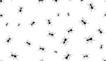 Groep mieren op witte ondergrond