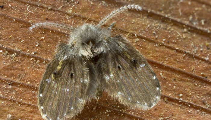Wistjedatjes – Motmuggen