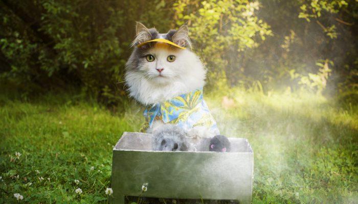 Muis wordt gebarbecued door kat