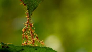 Antwoord op feiten en fabels over mieren
