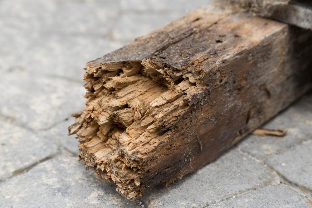 Afbrokkelend hout door houtworm