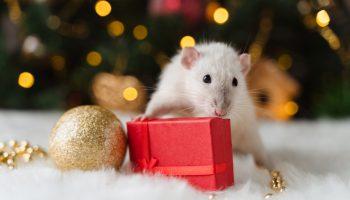 4 tips - voorkom ongedierte tijdens de feestdagen
