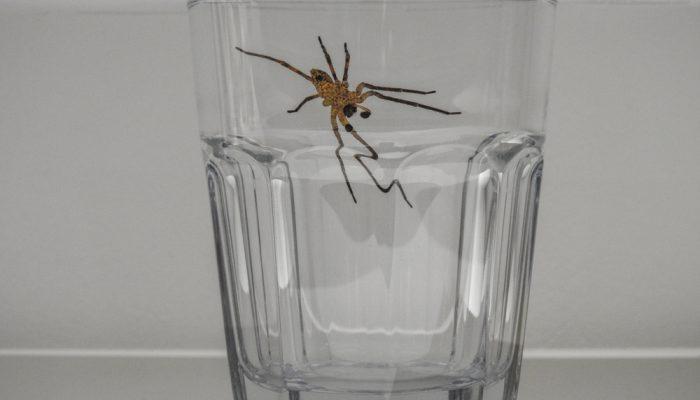 Bestrijdingsmiddel tegen spinnen