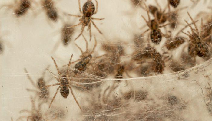 Spinnennest verwijderen