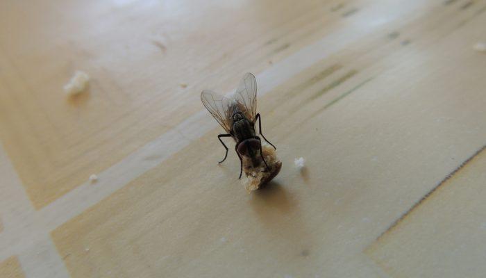 Wistjedatjes – Vliegen