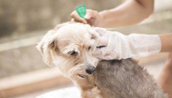 vlo op hond zelf bestrijden