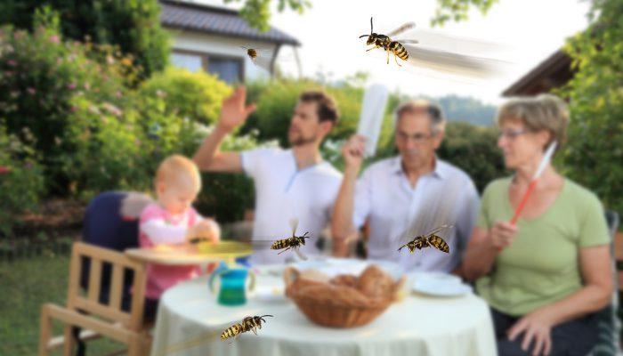 Wespenplaag in tuin
