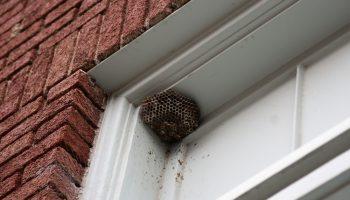 wespennest aan huis bestrijding nodig
