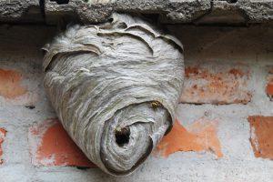 wespennest-papier